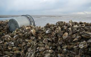 Growing fish and  shellfish on land economically viable