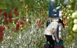 3 funds open for more sustainable production chains
